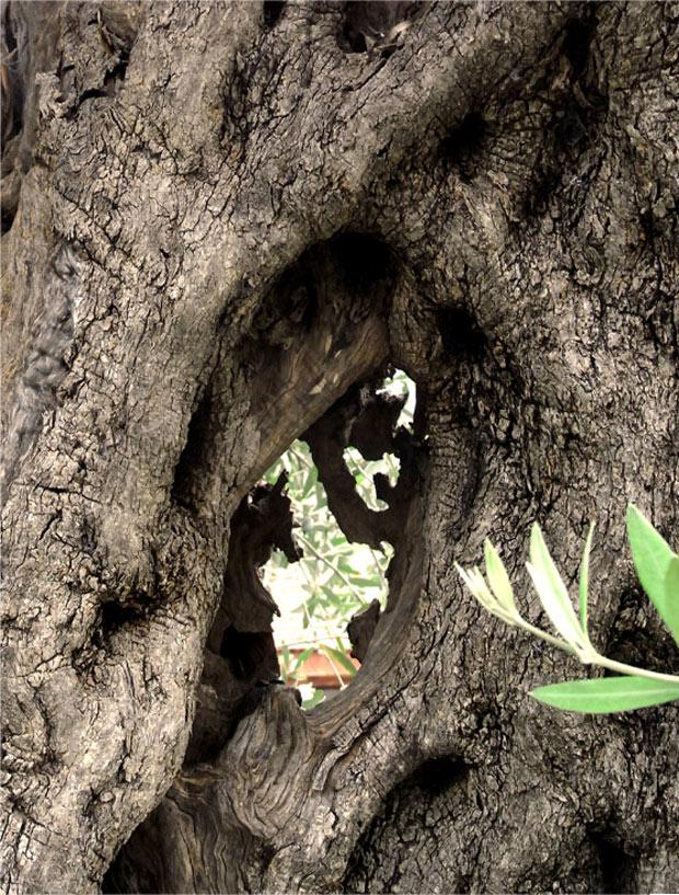 Die Erde - Blick durch einen Baum